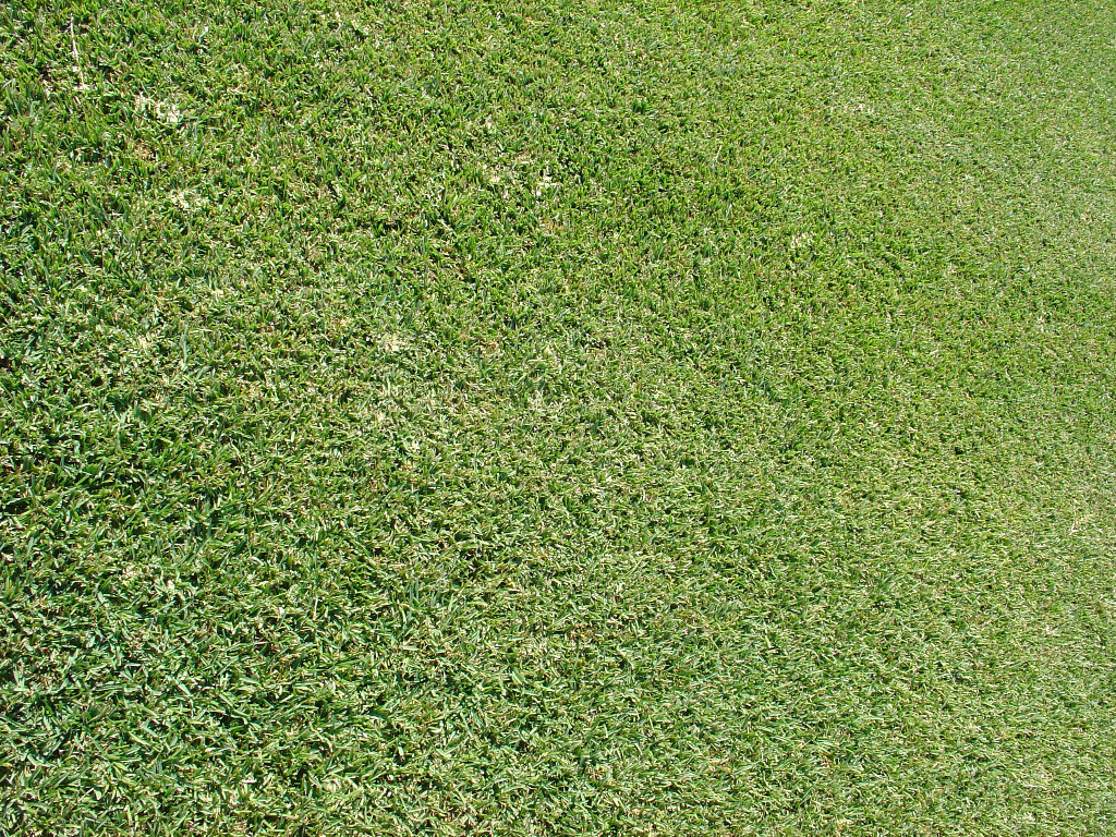 Landscaping With Bermuda Grass : Grass sod sale installation and maintenance georgetown tx